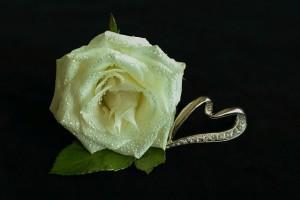 white-rose-3209250_640